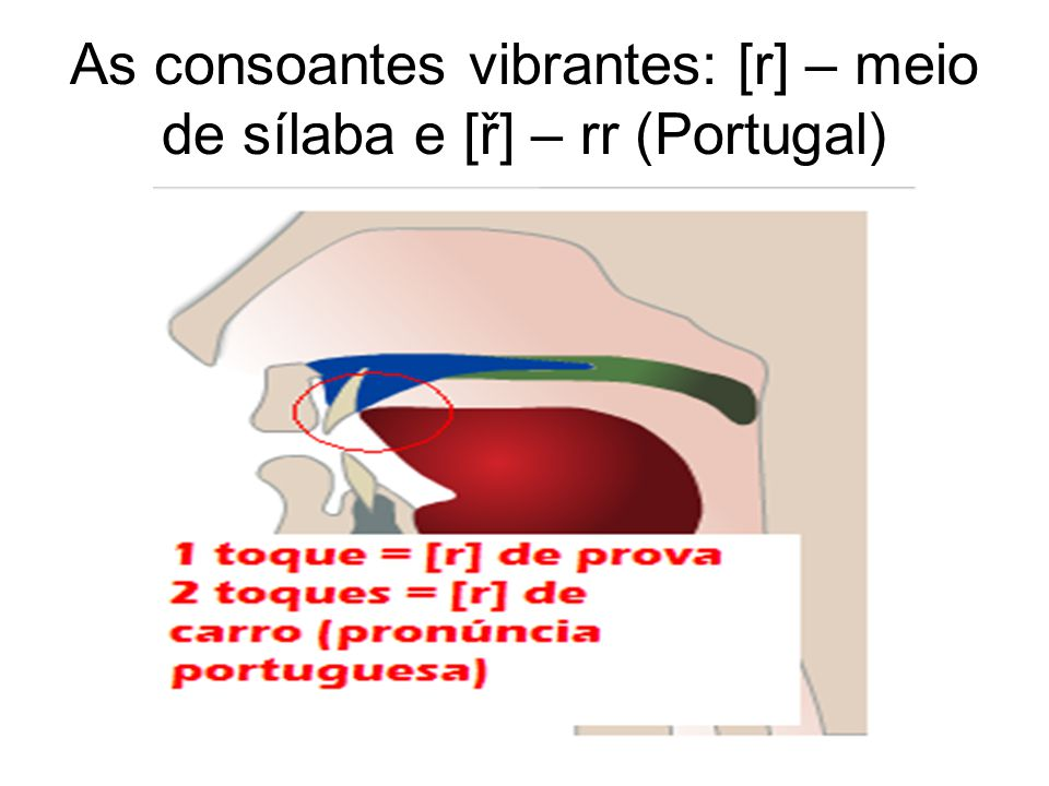 As consoantes vibrantes: [r] – meio de sílaba e [ř] – rr (Portugal)